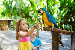 Kid feeding macaw parrot in tropical zoo. Child playing with big rainforest bird. Kids and pets. Children play and feed wild animals in safari park in sunny summer day. Little girl watching parrots.