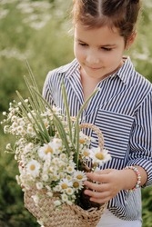 Kid Girl Holding Basket with Chamomiles Flowers Close-up Photo. Child Hold Wicker Bag with Wildflowers and Natural Green Grass Stay on Country Field. Style Clothes and Bracelet Wearing Baby