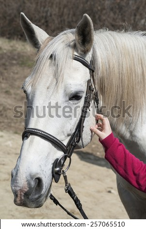 kid hand on horse head. child rub down horse.