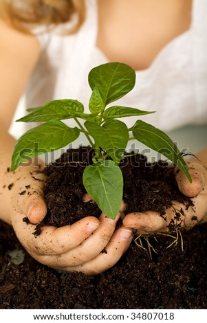 Kid hands holding a new plant in soil - closeup, shallow depth of field