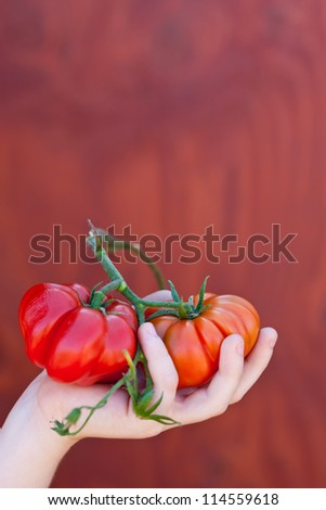 kid hands, holding tomatoes. Also available in horizontal format.