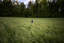 Kid in jacket shot from behind in distance walking alone in green field towards the trees.