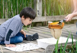 Kid looking at pond wildlife in white tray, Parent and son catching creatures in pond in summer time, Child explorer and learning about wild nature in countryside, Summer camp outdoors activity