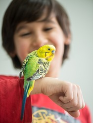 Kid playing with his pet parrot