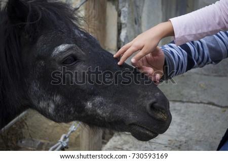 kid stroke horse #730593169