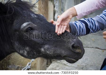 kid stroke horse #730593250