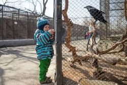 Kid watches animals and birds at the zoo. Child looks at animals in the zoo.