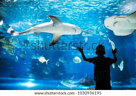 Stock Photo Kid watching the shoal of fish swimming in oceanarium