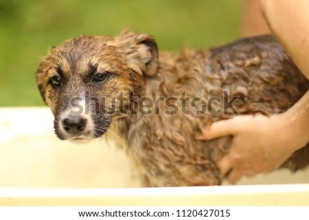 kids hand wasing puppy in bathtub close up photo on summer garden background