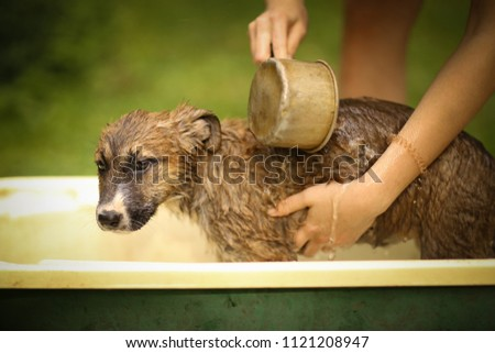 kids hand wasing puppy in bathtub close up photo on summer garden background