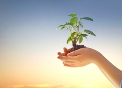 Kids hands with seedlings on sunset background. Spring concept, nature and care.