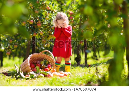 Kids picking ripe red apples from tree in country farm on sunny autumn day. Boy and girl pick fruit in apple orchard. Kid with basket. Child having fun during harvest time. Children play outdoor.