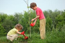 kids plant the tree