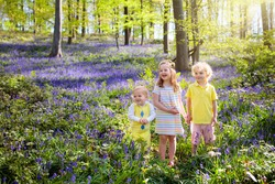 Kids playing in bluebell woods. Children watching protected plants in bluebell flower woodland on sunny spring day. Boy and girl in blue bell flowers meadow. Family walk in park with bluebells.