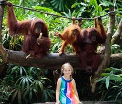 Kids watch orangutan monkeys in zoo. Little girl with orangutans in tropical safari park on summer vacation in Asia.
