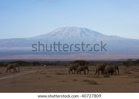 Kilimanjaro and the elefants