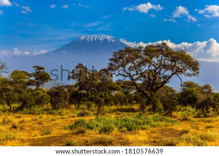 Kilimanjaro is Africa's highest point of the continent. The famous snow peak of Kilimanjaro. Savanna with rare bushes and desert acacia. The concept of active, exotic, ecological and photo tourism Photo stock ©