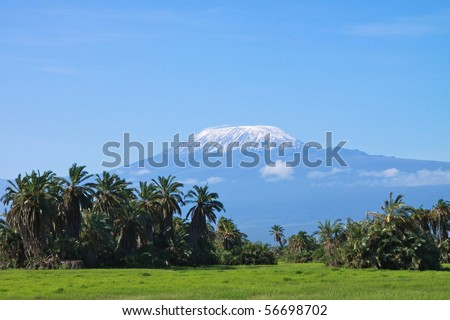 Kilimanjaro viewed from the palm tree thickets of Amboseli