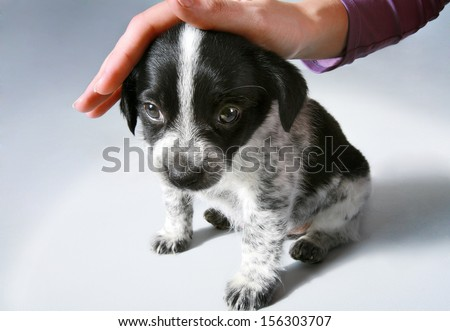 Kindness will save the world / studio photography of stroking the little puppy - on background