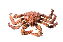 King crab isolated on a white background