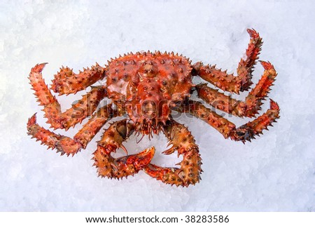 King crab on a white ice background