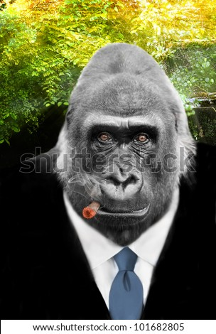 King of the Jungle, real Gorilla with shrewd eyes in Business Suit smocking Cigar