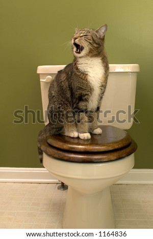 King on its throne (Cat sitting on toilet seat )