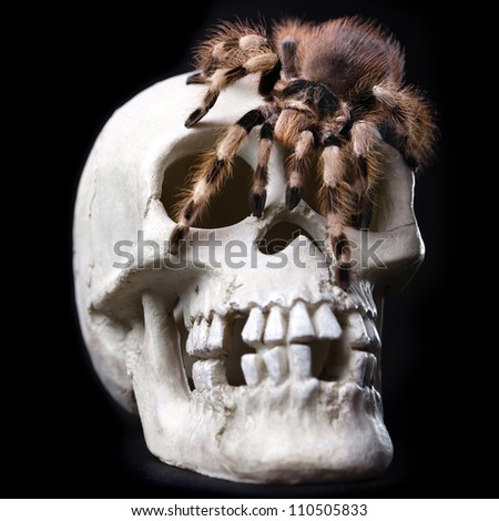 King Tarantula. Skull Isolated On black Background. #110505833