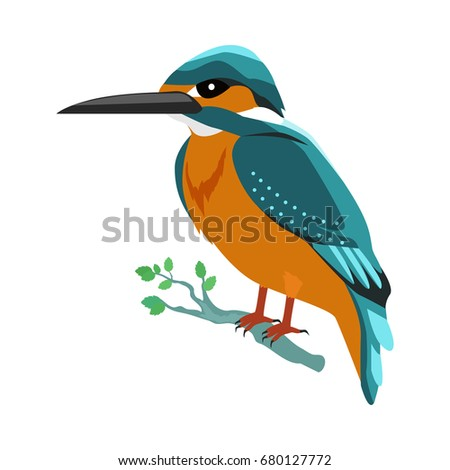 Kingfisher . Predatory birds wildlife concept in flat style design. Tropical fauna illustration for prints, posters, childrens books illustrating. Beautiful kingfisher bird seating isolated on white.