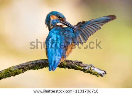 kingfisher with a fish in his beak