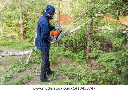 Kirishi, Russia - 24 May, 2019. Worker with a chainsaw sawing a branch. Removal of large emergency trees by arbordistics specialists. #1418453747