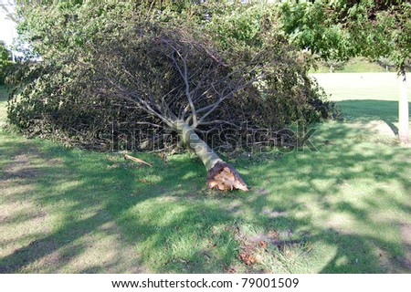 KIRKCALDY, SCOTLAND - MAY 29: A tree is uprooted on May 29, 2011 in Kirkcaldy, Scotland following storms which saw wind speeds reach of up to 100 mph across the country.