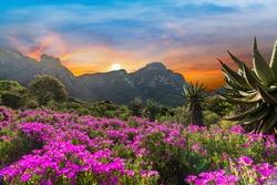 Kirstenbosch National Botanical Garden during sunset in Cape Town South Africa