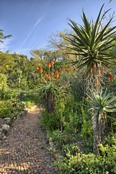 Kirstenbosch National Botanical Garden is acclaimed as one of the great botanic gardens of the world. Located in Cape Town, South Africa, the garden is host to thousands of plant and animal species.