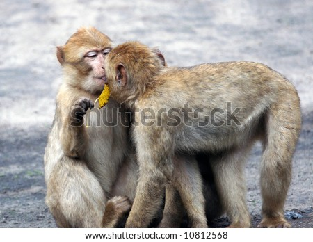 Two monkeys hugging drawing - photo#12