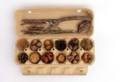 kit for crafts made from natural materials, acorns, chestnuts, cones and other forest materials, autumn flat lay,