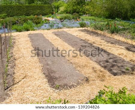 Kitchen garden in early spring with straw mulch