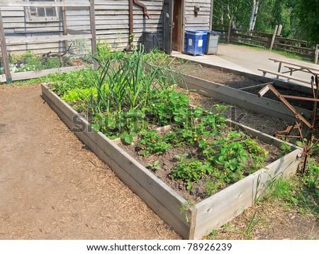 Kitchen garden in raised wooden bed - stock photo
