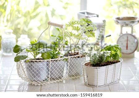 Kitchen garden of herbs windowsill #159416819