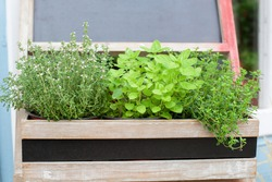 Kitchen herb plants in wooden box in home. Fresh herbs on balcony garden in pots. Mixed Green fresh aromatic herbs - melissa, mint, thyme, basil, parsley in pots. Aromatic spices Growing in home.