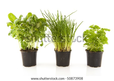 Kitchen herbs as basil parsley and chive