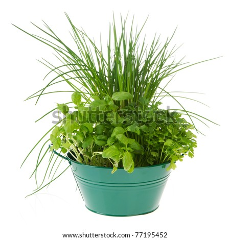 Kitchen herbs in green bucket isolated over white