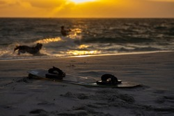 Kitesurfing board placing on the beach with defocused beautiful silhouette picture dog running barking at professional kite surfer surfing riding on the wave ocean sunsetting at the background