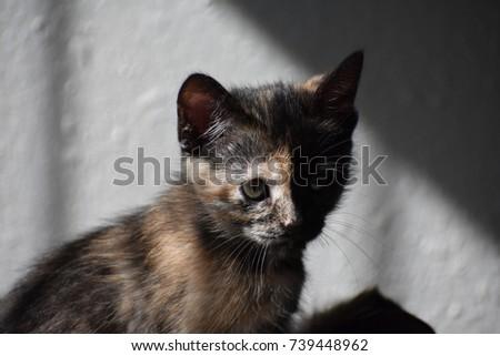 kitten #739448962
