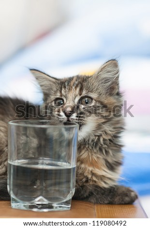 Kitten and a glass of water