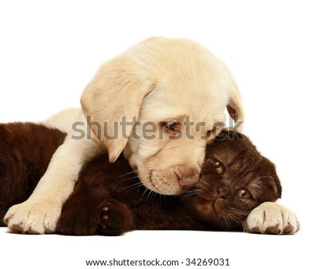 Kitten and a pup together. - stock photo