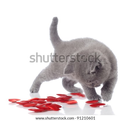 kitten and decorative hearts