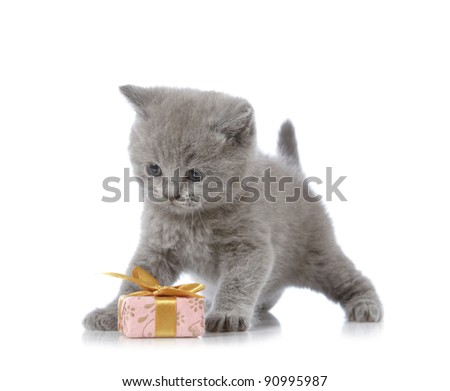 kitten and gift box