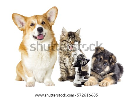 Shutterstock kitten and puppy and microscope