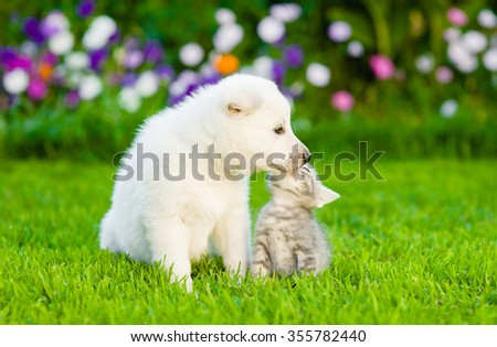 Kitten and puppy are kissing on the green lawn